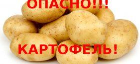 Картофель посчитали опасным продуктом