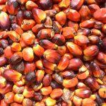 Пальмового масла станет больше