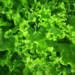 Как салат и другая зелень может вызвать отравление