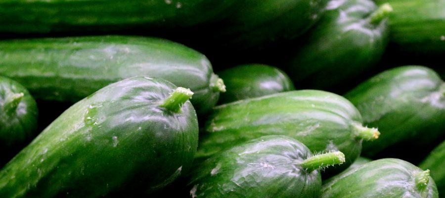 Горькие огурцы и кабачки могут вызвать пищевое отравление