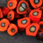 Пальмовое масло лоббируется так же, как табачная и алкогольная промышленности, говорит ВОЗ