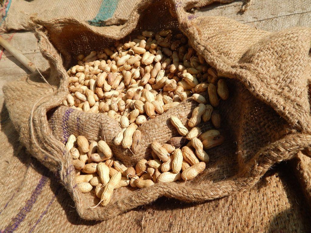Вред арахиса для здоровья