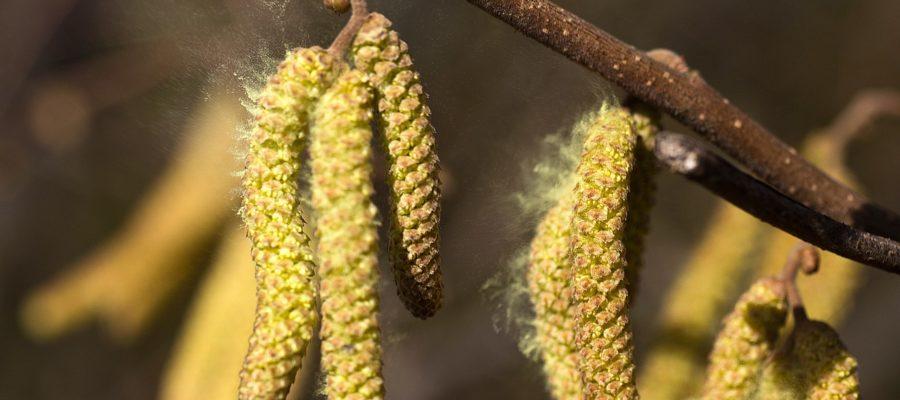Что нельзя есть в сезон аллергии на пыльцу
