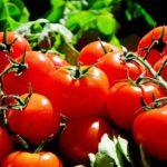 Побочные эффекты употребления слишком большого количества помидоров